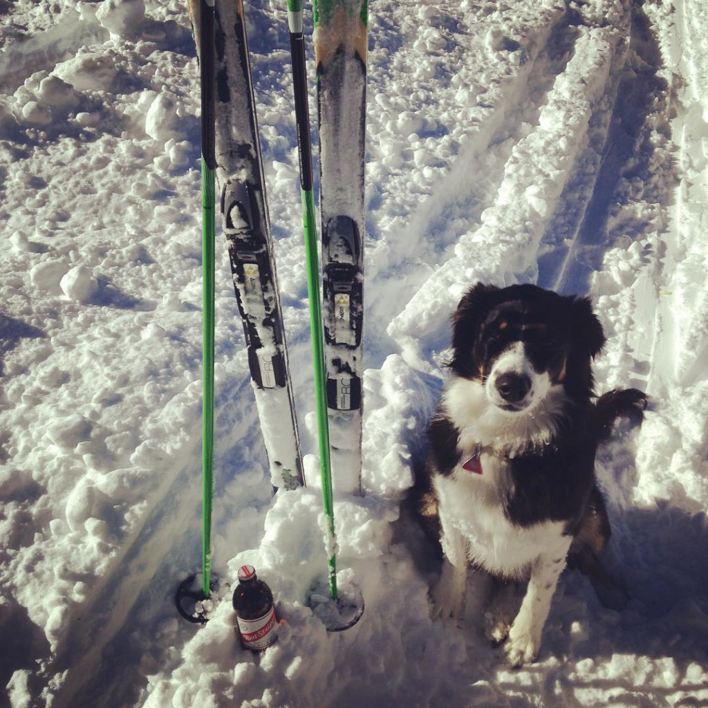 cross country skiing, dog friendly, norwood colorado